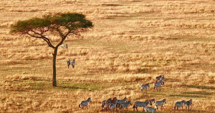 Pourquoi partir en Voyage en Tanzanie