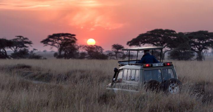 Trouver et préparer un safari en Afrique